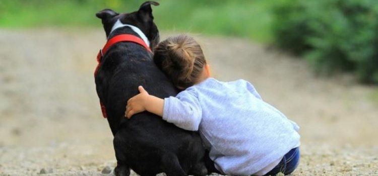 Día del animal: Por qué se celebra el 29 de abril en la Argentina