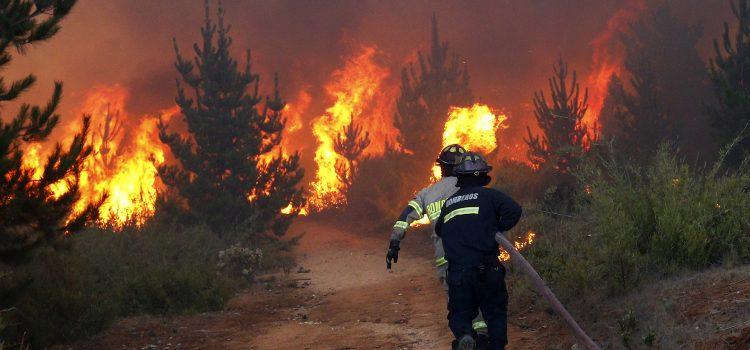 Hablamos con Stefanía Dommarco sobre los incendios forestales en Argentina